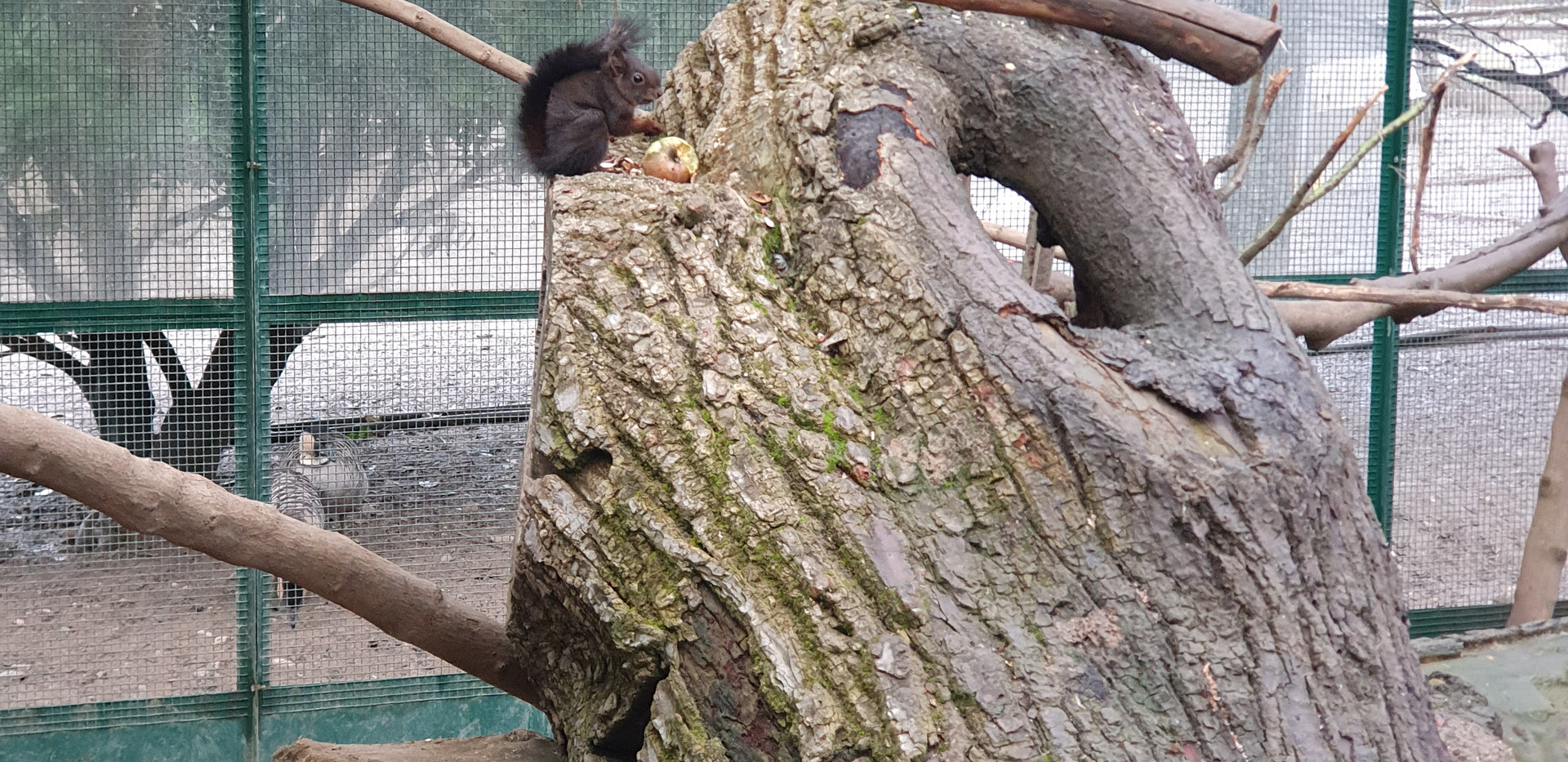 Squirrel aviary