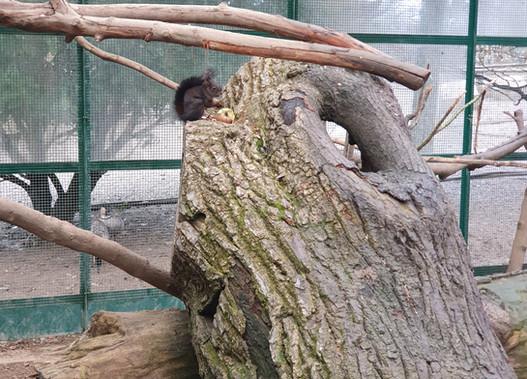 Volière écureuils