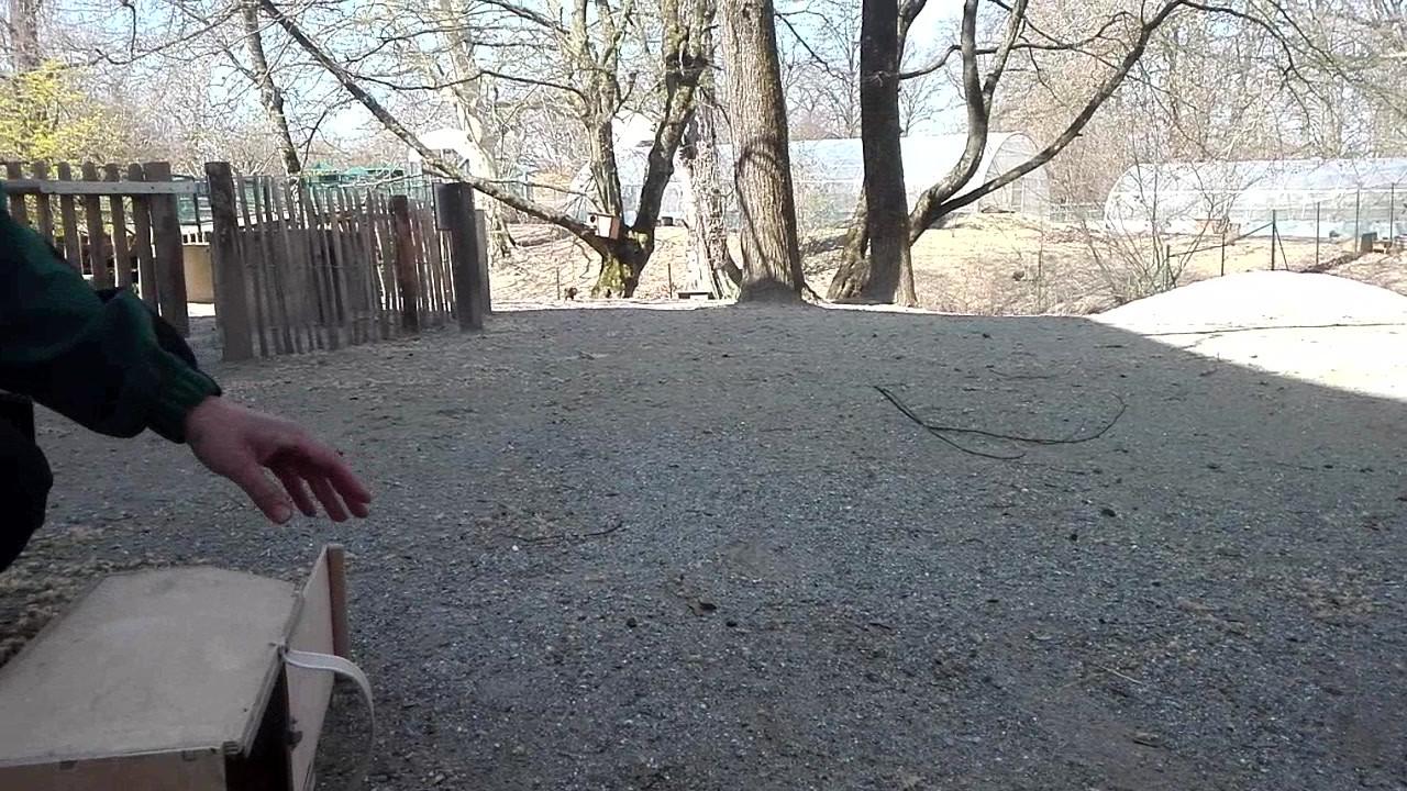 Relâché d'écureuil