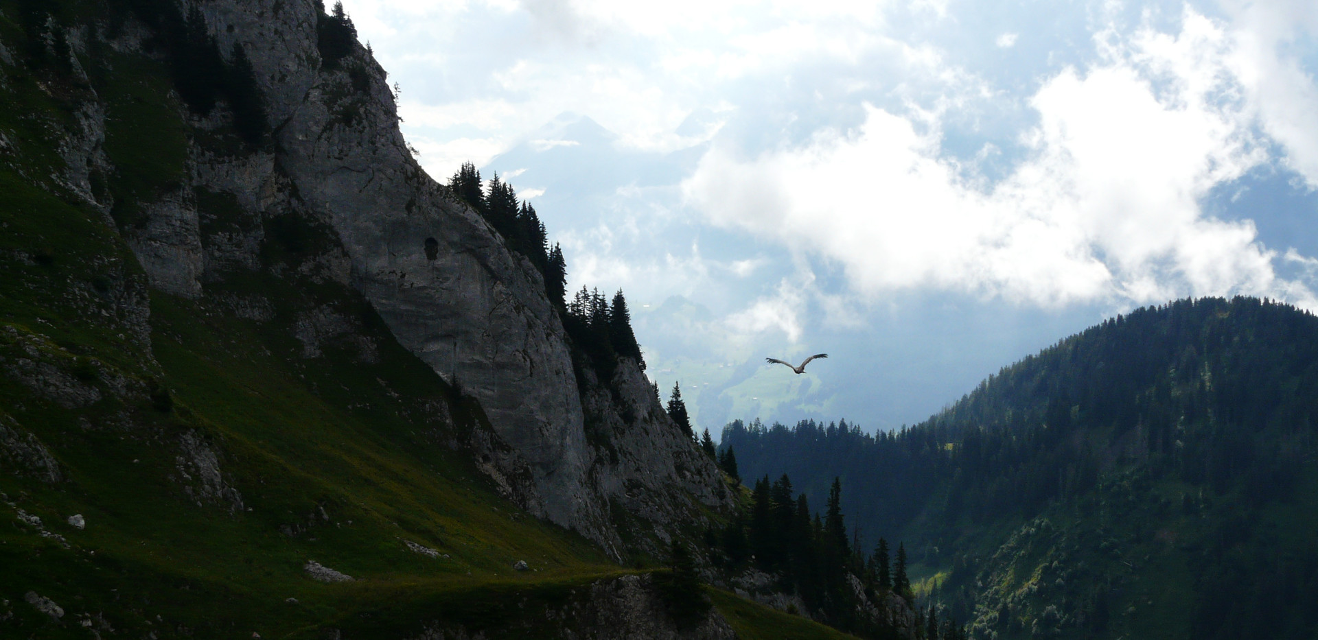 Relâché d'un vautour fauve