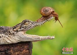 audace escargot.jpg