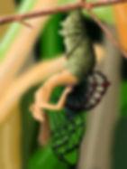 femme chrysalide.jpg
