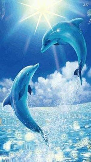 dauphins-web.jpg