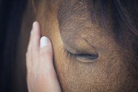 femme sauvage et cheval