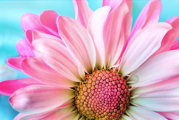 flower-3140492.jpg