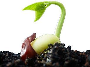 germinated-seed.jpg