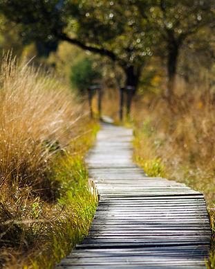 wooden-track-1932611_1920.jpg