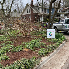 Spring landscape and bed clean up