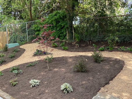 Backyard Garden with Pathway