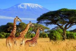 africa-safari-Cover1