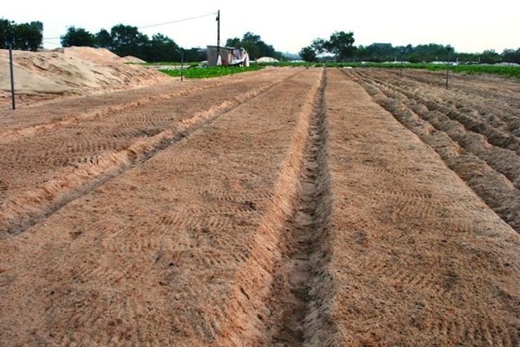 Xử lý đất trước khi trồng để tiêu diệt mầm bệnh, cải tạo đất