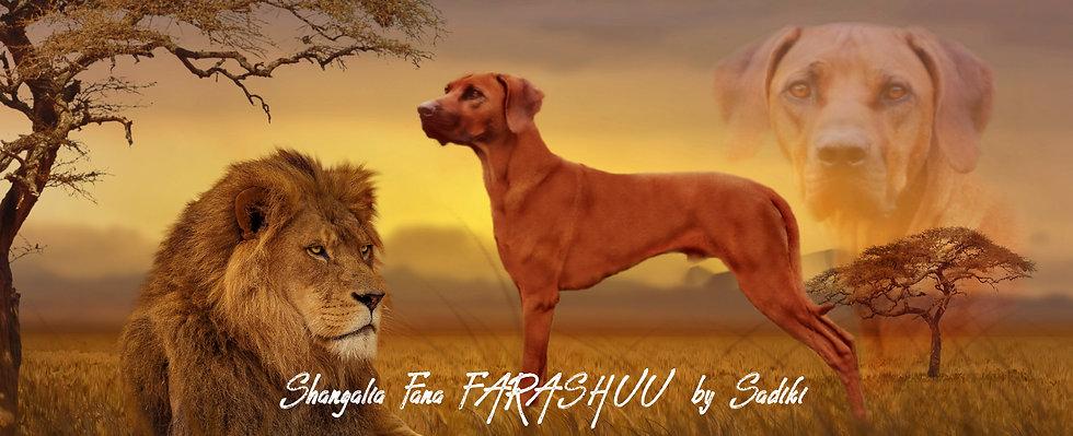 Farashuu Website(1).jpg
