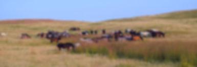 Herd Prairie_edited.jpg