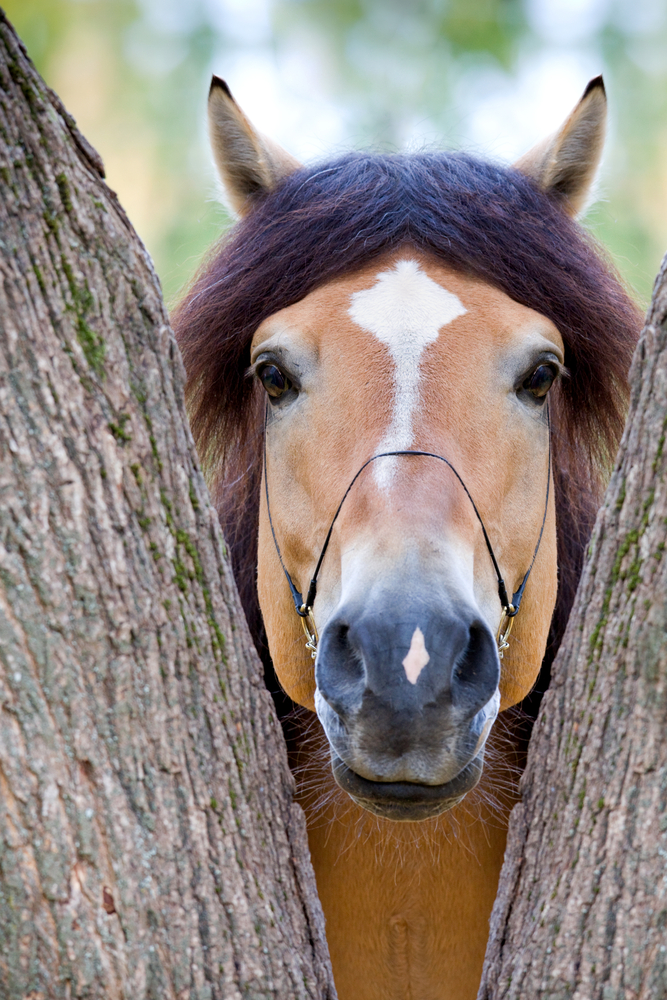 horse between trees med