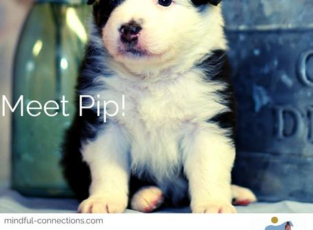 Meet Pip