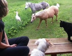Animals off balcony_crop