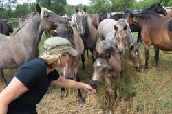 Nicole Foal