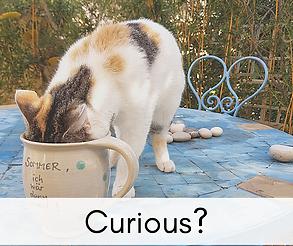 Curious_.png
