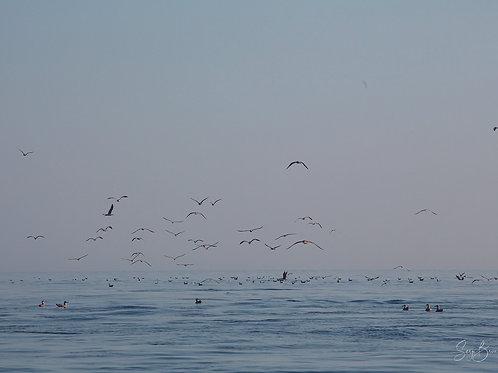 Oiseaux, mer calme
