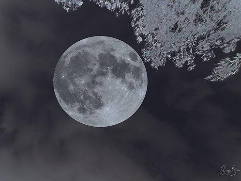 Pleine Lune à Leucate