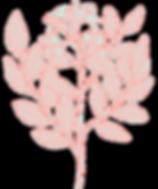 flor rosa.png