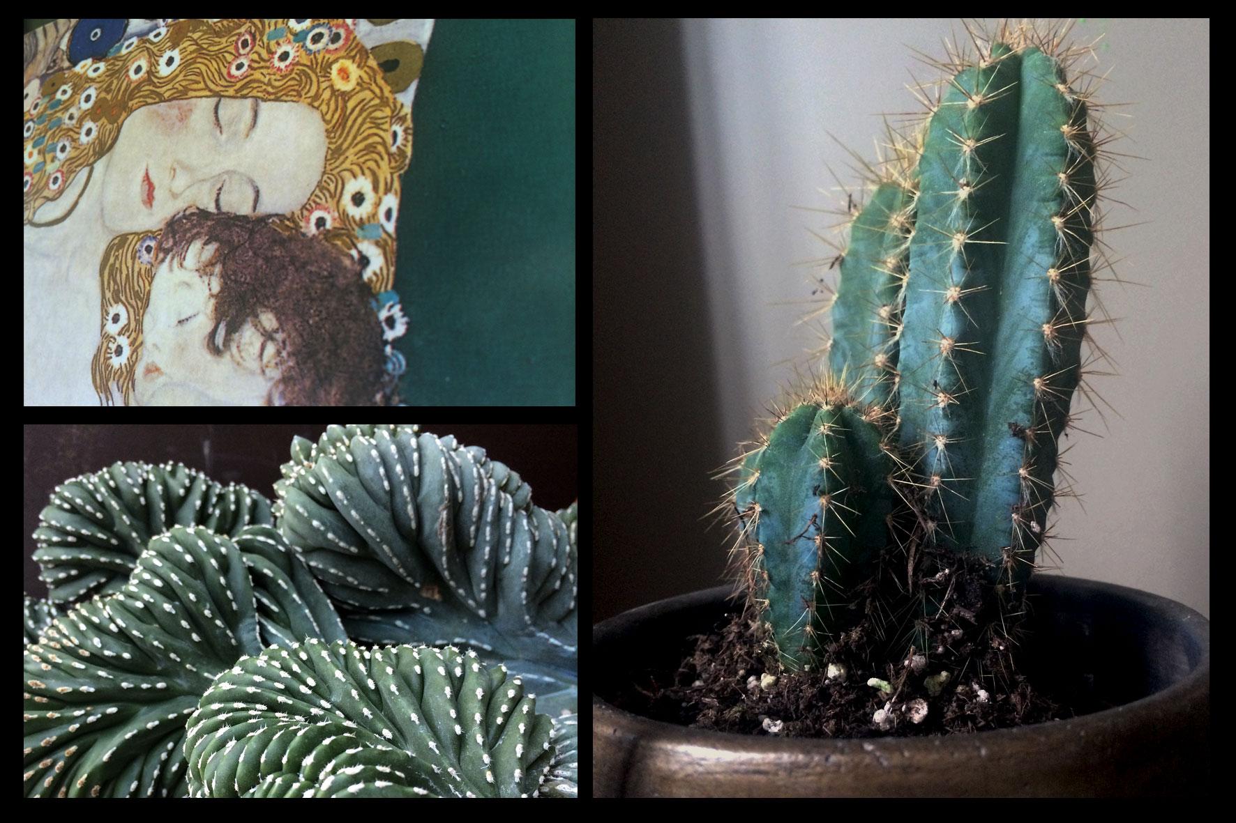 Décoration d'intérieur - Cactus