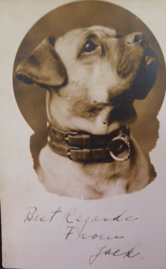 Jack the Dog is immortalized on college postcards, 1906.