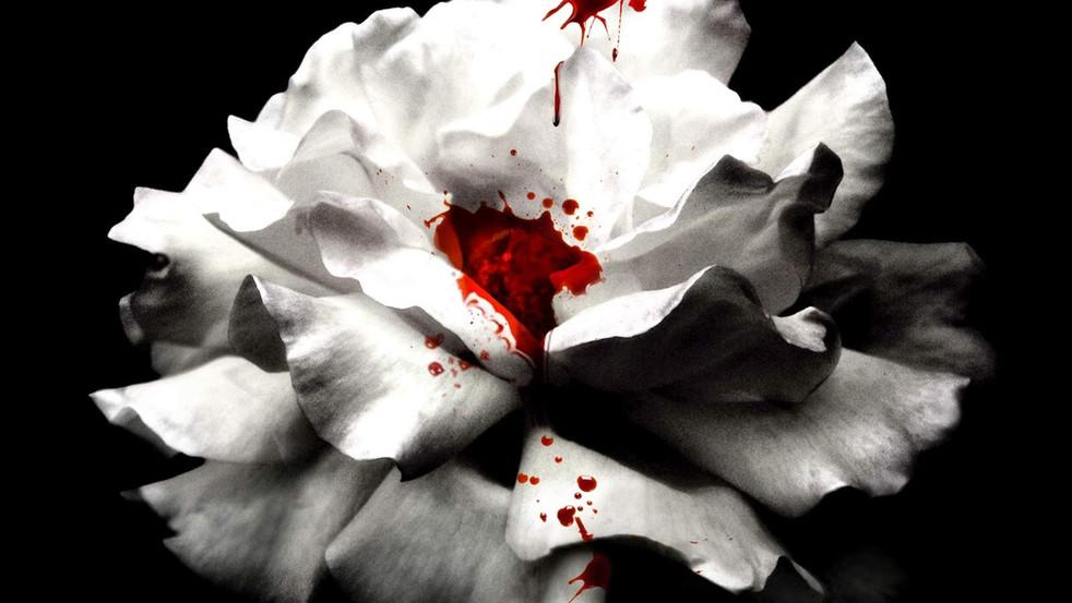 """Crave"" - The New Twilight?"