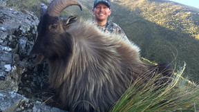Recap of the 2016 Tahr season