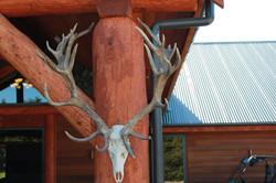Lodge Stag Portico