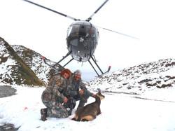 Chamois heli hunt 2014