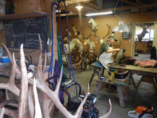Trophy Export preparation