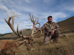 400 class Red Stag