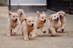 my breeding dogs