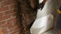 Termite damage in garage wall