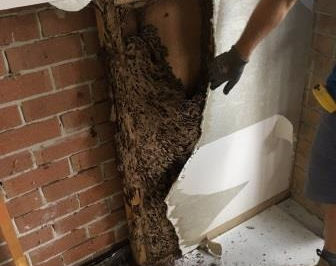 Termite damage in garage wall