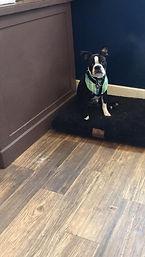 dog grooming orange county ny tuxedo bark club