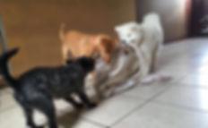 small dogs orange  county new york