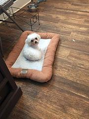 dog grooming orange county ny