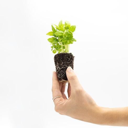 albahaca-planter-1.jpg