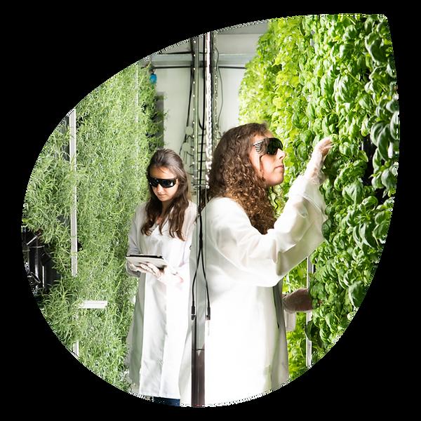2 trabajadoras en la granja Groots examinando plantas