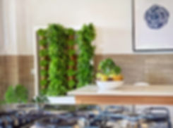 Smart indoor garden growing lettuce inside a kitchen with a table deocrated with apples