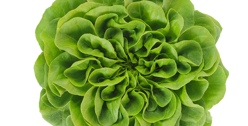 Green Salanova Lettuce