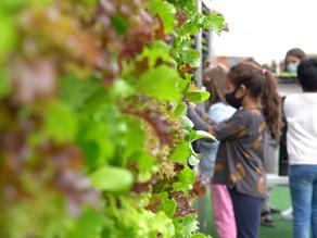 Agricultura Urbana para la inclusión social, la salud y el bienestar