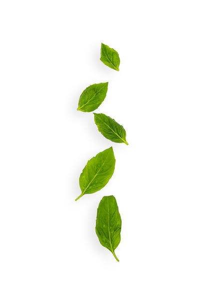 basil leafs.png