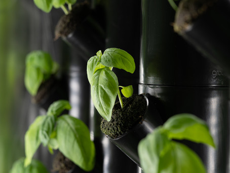 What is Vertical Farming? And why Growing Up Can Make a Difference