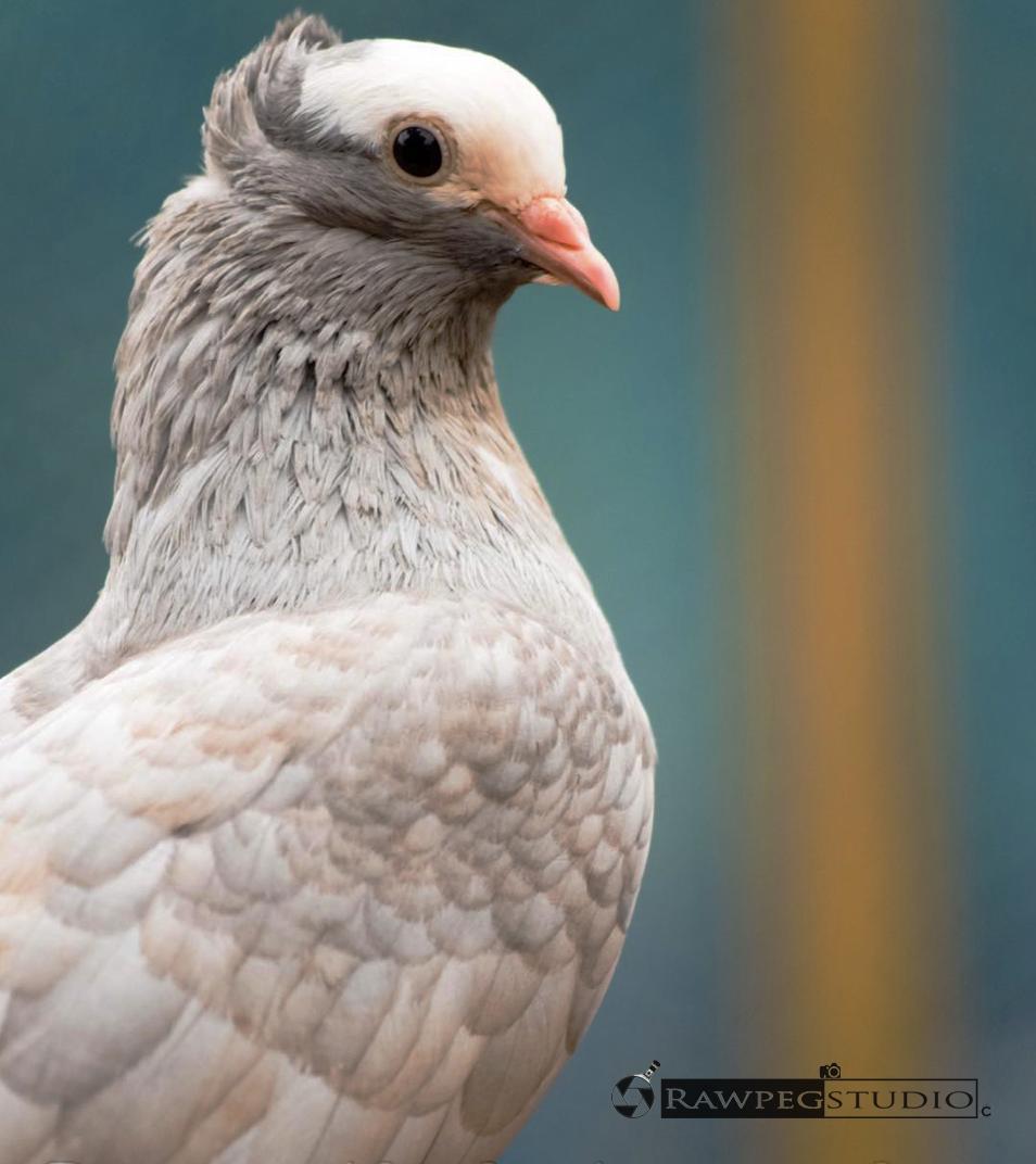 #rawpegstudio#birdshoot
