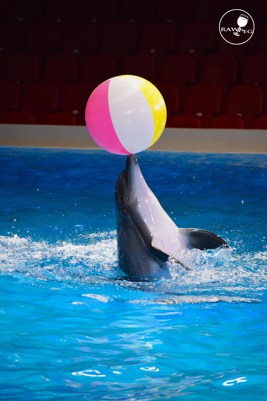 #rawpegstudio#dolphinshow#dubai