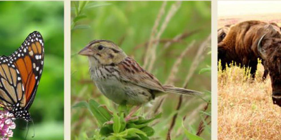 Eco-Logic: Restoration for Wildlife Habitat