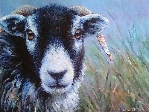 Horned Sheep- £350